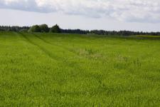 Zaļā pļavā